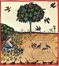 medieval bird trapping