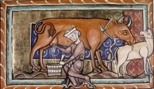 Medieval Cow Milking